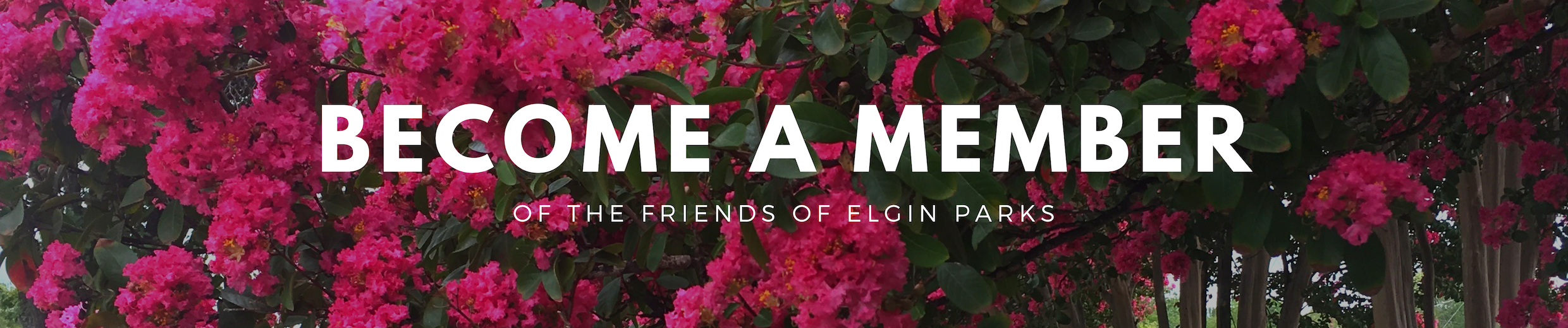 friends of elgin parks